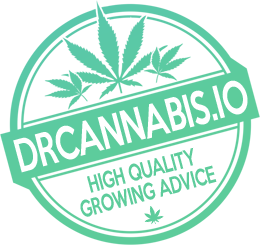 drcannabis-stamp