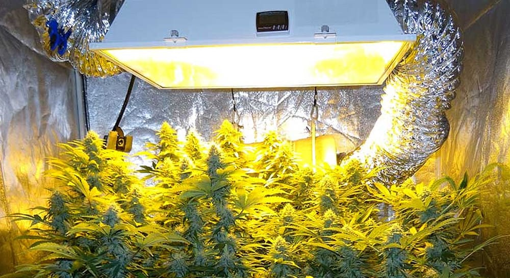 best-hid-grow-lights-top-picks