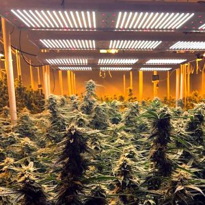 best-led-grow-lights-2020